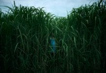 in-the-tall-grass-stephen-king-joe-hill-netflix