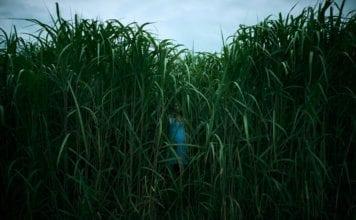 in-the-tall-grass-stephen-king-joe-hill-netflix